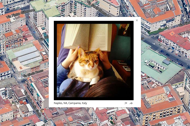 Mapping public photos of cats using their metadata
